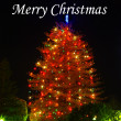 Out door Christmas Tree — Stockfoto