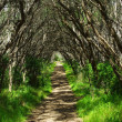 Stock Photo: Walking track through treed tunnel