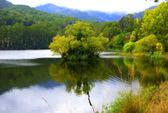 Lake Guy in australia with autumn colours — Stock Photo