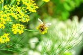 Bee in garden setting — Stock Photo