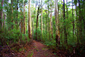 Bush walking track in country victoria australia — Stock Photo