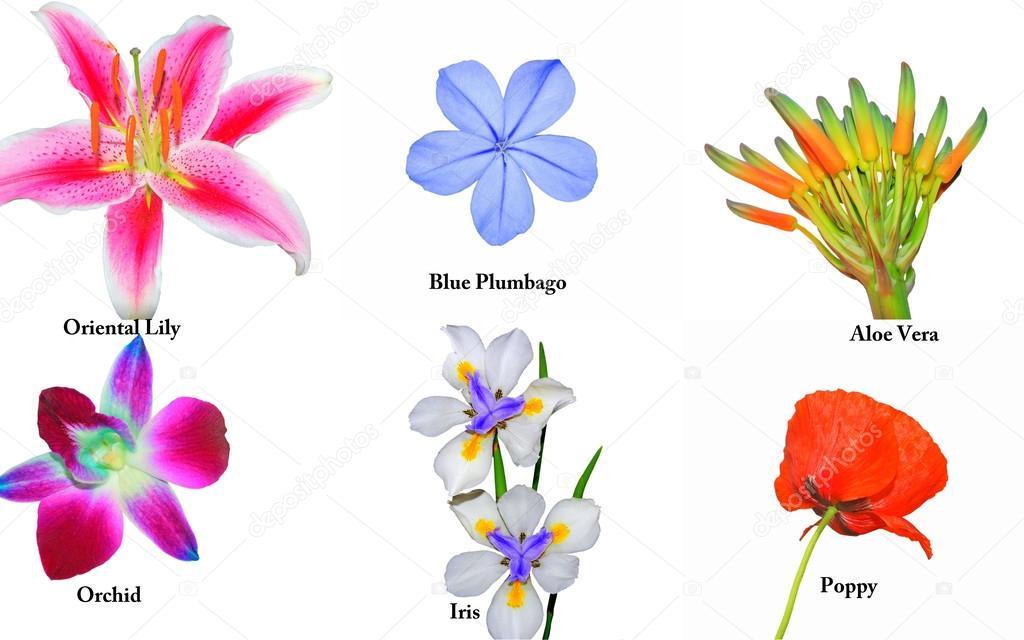 flores jardim primavera : flores jardim primavera:Flores no jardim primavera comum — Fotografias de Stock © Kez53