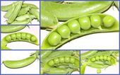 Fresh green peas collage — Foto Stock