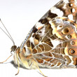 Butterfly on a white background — Stock Photo