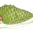 Stock Photo: Green pinecone