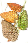 Green and brown pinecones — Foto Stock