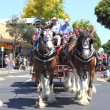 Clydesdale horses in harness on street parade — Stock Photo #37280123
