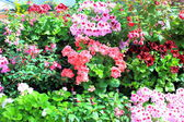 Colourful flower garden — Stockfoto