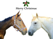 Two horses with holly and merry christmas text — Stock Photo