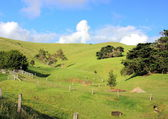 Australian country landscape — Stock Photo