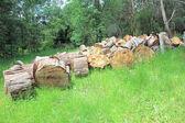 Stacks of sawn logs in forest setting — Stock Photo