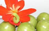 Green caterpillar on red flower — Stock Photo