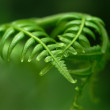 Exotic ferns — Stock Photo
