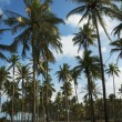 Secluded road among coconut trees — Stock Photo #32574335