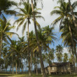 Secluded old wooden house among coconut trees — Stock Photo #32574345