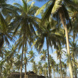A secluded old wooden house among coconut trees — Stock Photo