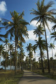 Secluded road among coconut trees — Stock Photo
