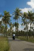 Gemakkelijke rit onder kokospalmen — Stockfoto
