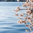 Cherry Blossoms Hanging Over The Tidal Basin With The Jefferson Memorial - Stock Photo