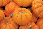 Orange small pumpkins — Stockfoto