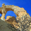 Grosvenor Arch with dead tree — Stock Photo