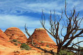 Paesaggio con albero morto — Foto Stock