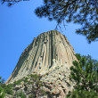 Devil's Tower with trees — Stock Photo