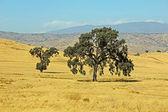 Central California landscape — Stock Photo
