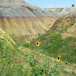 Wild Sunflowers in Badlands National Park, South Dakota — Stock Photo