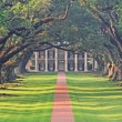 Sunrise in Oak Alley Plantation, Vacherie, Louisiana — Stock Photo