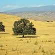 Stock Photo: Central Californilandscape