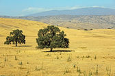 Central California landscape — Stock Photo
