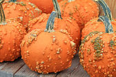 Orange pumpkins covered with warts — Stock Photo
