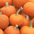 Orange pumpkins — Stock Photo