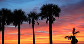 Silhouette of palm trees before sunset — Stock Photo