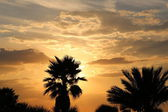 Palm tree silhouette on sunset sky — Stock Photo