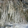 Frozen branches — Stock Photo