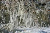 Rami congelati — Foto Stock