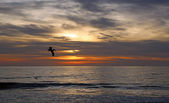 Silhouette of pelican on sunset sky — Stock Photo