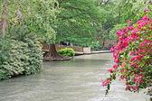 Luxuriant flora on San Antonio River — Stock Photo