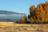 Clouds bank and trees in autumn colors — Stock Photo