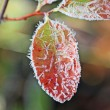 Stock Photo: Frost crystals on red leaf