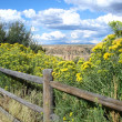 Stock Photo: Wooden fence with bushes in yellow blossom
