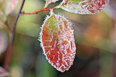 Frost crystals on red leaf — Stock Photo