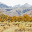 Stock Photo: Colorful autumn in SierrNevada, California