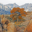 Stock Photo: Mount Whitney and tree