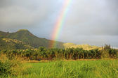 Rainbow rising from palm trees plantation — Stock Photo
