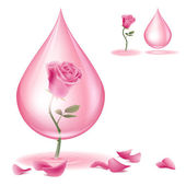 Dripping of rose oil — Stock Vector