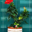 Red flower on the windowsill — Stock Photo