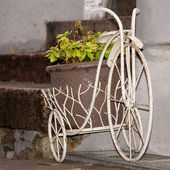 Decorative bike with a green plant in a pot — Stock Photo